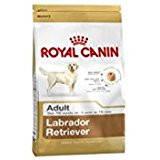 Labrador Adult (3 kg)