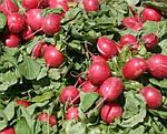 Что и когда выращивать в парнике из агроволокна?
