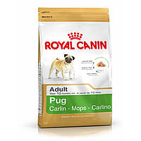 Pug Adult (Мопс 3 kg)