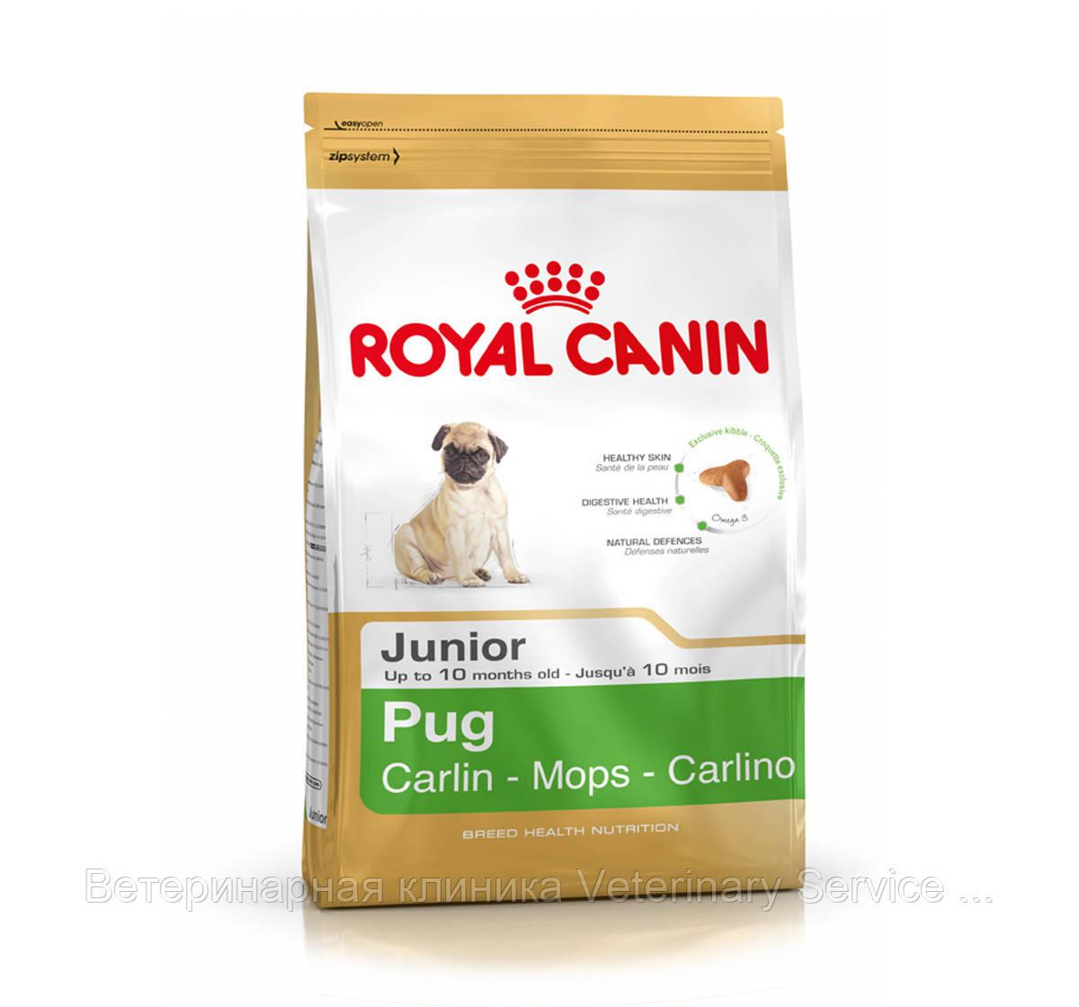 Pug Junior (Мопс 0,5 kg)