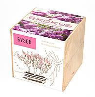 Набор для выращивания Экокуб Сирень, комнатные растения