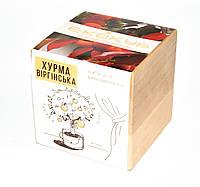 Набор для выращивания Экокуб Хурма, комнатные растения