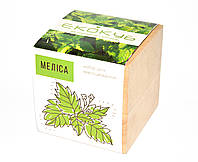 Набор для выращивания Экокуб Мелисса, комнатные растения