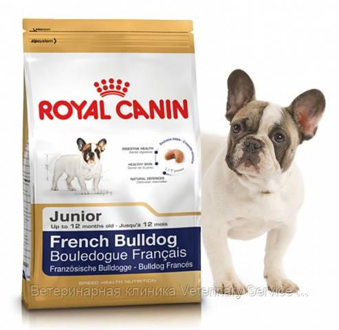 French Buldog Junior (1 kg)