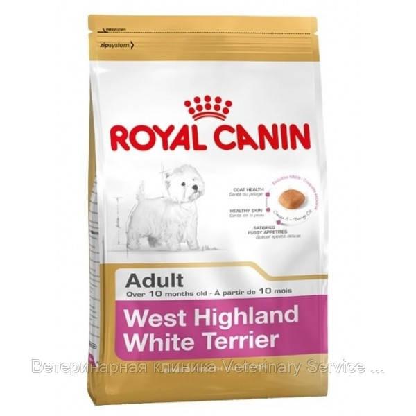 West Highland White Terrier Adult (Westie 3 kg)
