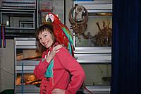 В продаже зеленокрылый ара – ручной выкормыш