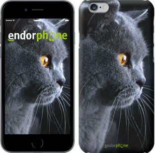 """Чехол на iPhone 6 Красивый кот """"3038c-45"""""""