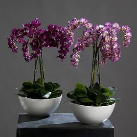 Кашпо для орхідей
