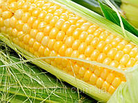 Купить Семена Кукуруза Добрыня 2500 семян Ларк Сидс