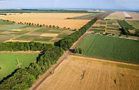 Названы последние цены на стоимость аренды сельскохозяйственной земли