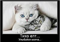 Магниты Приколы Коты 1