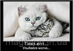 Магніти Приколи Коти 1