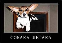Магниты Приколы. Собака 1