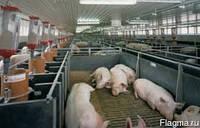 Строительство свинокомплексов