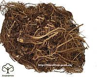 Эхинацея пурпурная (Echinacea purpurea, Purple echinacea) корень 100 грамм