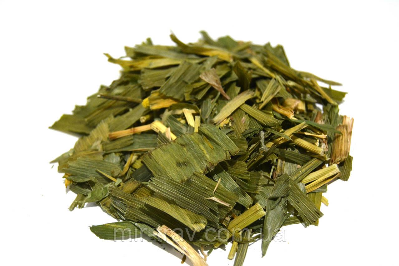Ландыш майский листья (ландыш трава)
