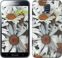 "Чехол на Samsung Galaxy S5 g900h Ромашки v2 ""2699c-24"""