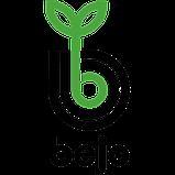 Огурец Анзор F1, 250 семян, Bejo (Бейо) Голландия, фото 3