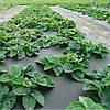 Агроволокно мульчирующее Premium-agro 50 г/м2 - 3,2х10м (черное)