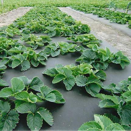 Агроволокно мульчирующее Premium-agro 50 г/м2 - 1,6х100м (черное), фото 2