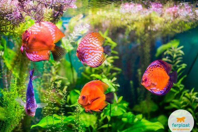 Зоотовары Ferplast для аквариумных рыб