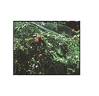 Полипропиленовая сетка для защиты от птиц ORTOFLEX