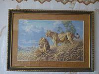 """Картина вышитая крестиком в рамке """"Львы"""" (ручная работа)"""