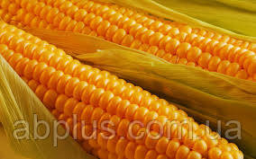 Семена кукурузы Р 8025