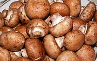 Мицелий зерновой маточный Шампиньон  королевский, 250мл