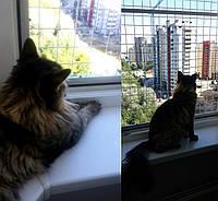 Сетка на окна от котов Антикошка.