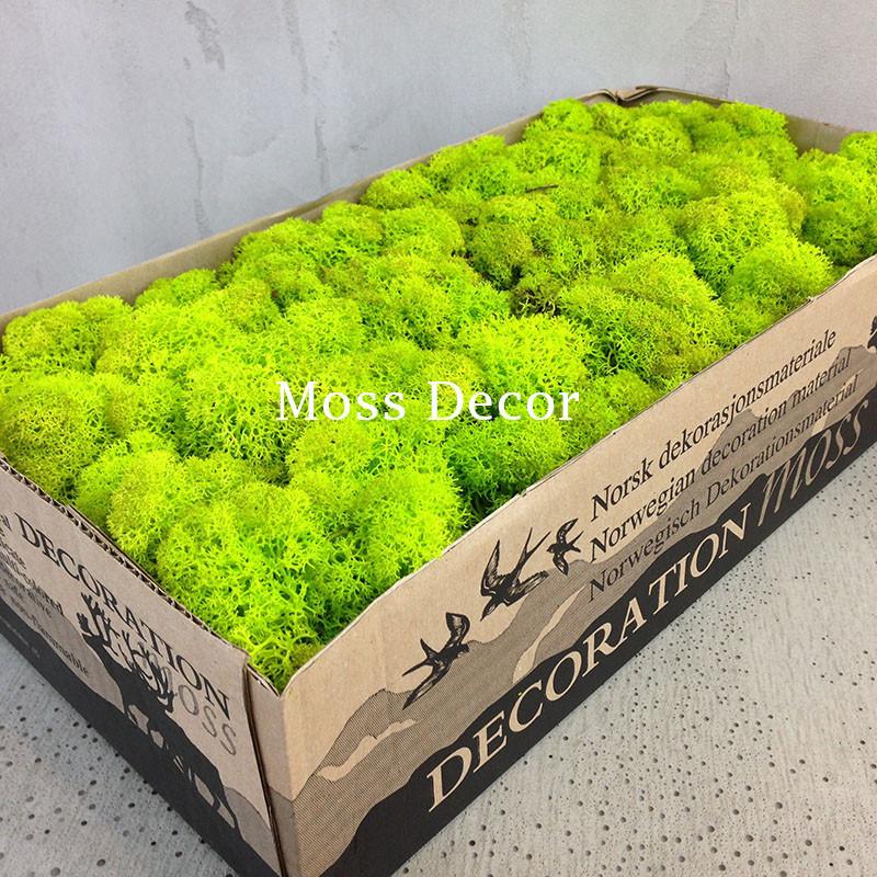 Стабилизированный мох в коробке (салатовый)