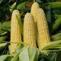 Cемена кукурузы Пионер Р8000 (П8000)