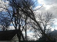 Спил опасных деревьев