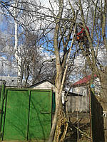 Спиливание аварийных опасных деревьев Срезание аварийно опасных веток и деревьев