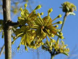 Узнайте сексуальное здоровье с растением Сорняк Горной Козы