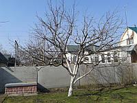 Обрезка яблони, фото 1
