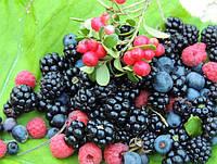 Украинцев накормят новыми сортами ягод