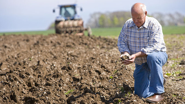 Названа стоимость гектара при введении рынка земли сельхозназначения
