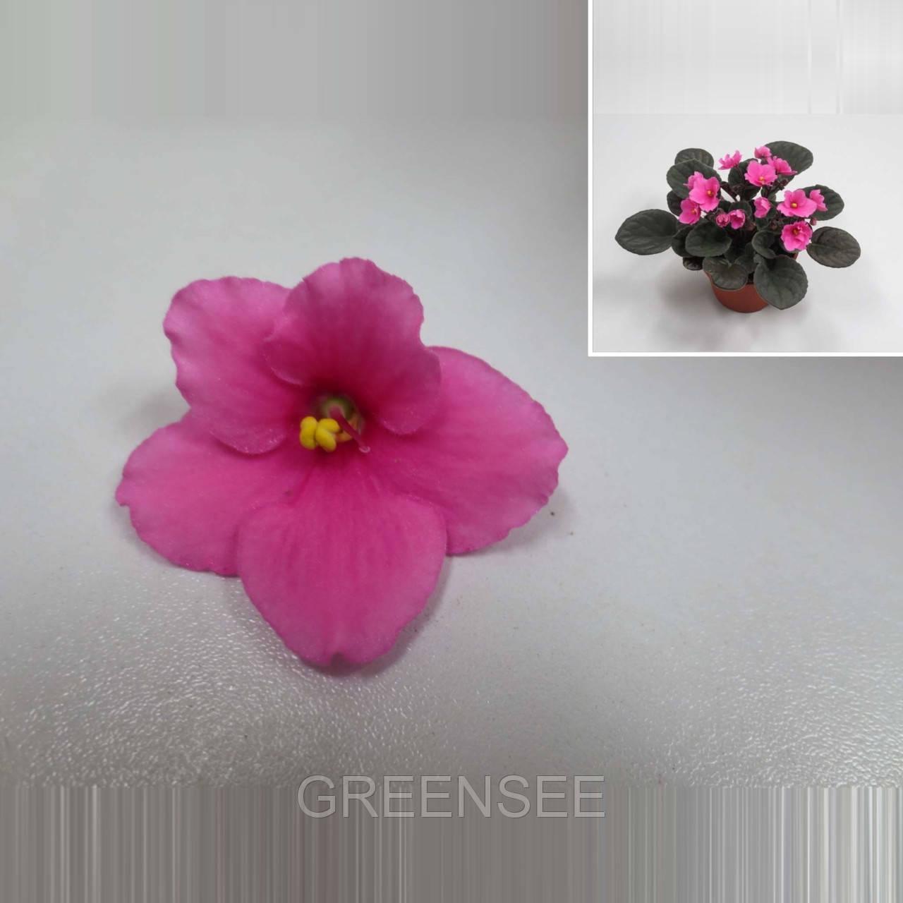 Где можно заказать цветы фиалки в одессе, букет гортензия киев
