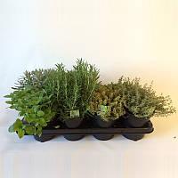 Смесь пряных трав -- Herbs mixed  P14/H25