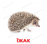 """Карточки Домана большие украинские с фактами """"Дикие животные"""""""