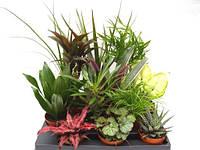 Комнатные растения микс -- Indoor plants mixed  P/H