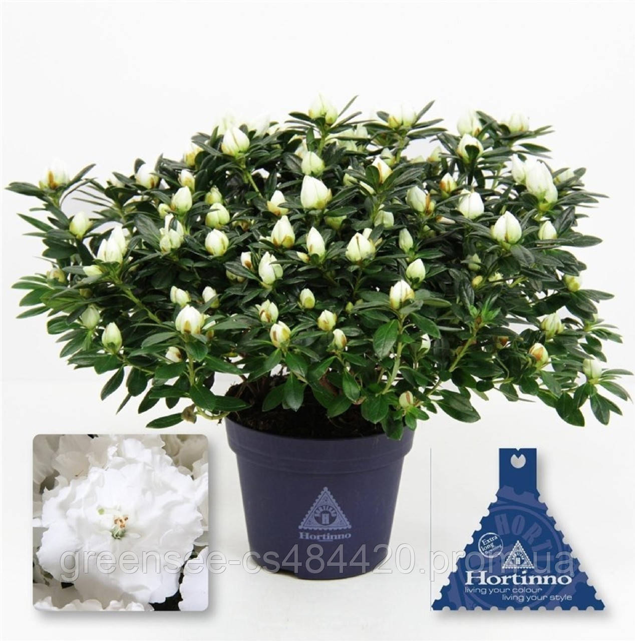 Цветы рододендроны купить цена для