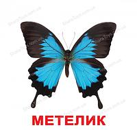 """Карточки Домана большие украинские с фактами """"Насекомые"""""""