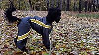 Индивидуальный пошив одежды для больших пород собак.