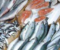 Мойва, пангасиус, лосось, минтай, хек, сельдь.