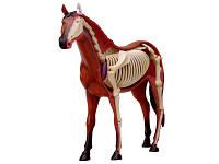 Объемная анатомическая модель Лошадь 4D Master (26101)