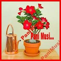 Красная Роза пустыни Инструкция по высеву + семена