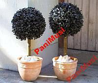 Эвкалипт Гумми Инструкция + семена в подарок Акция