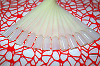 Планшет для образцов веер матовый (12шт), фото 1